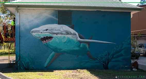 Bundeena's shark